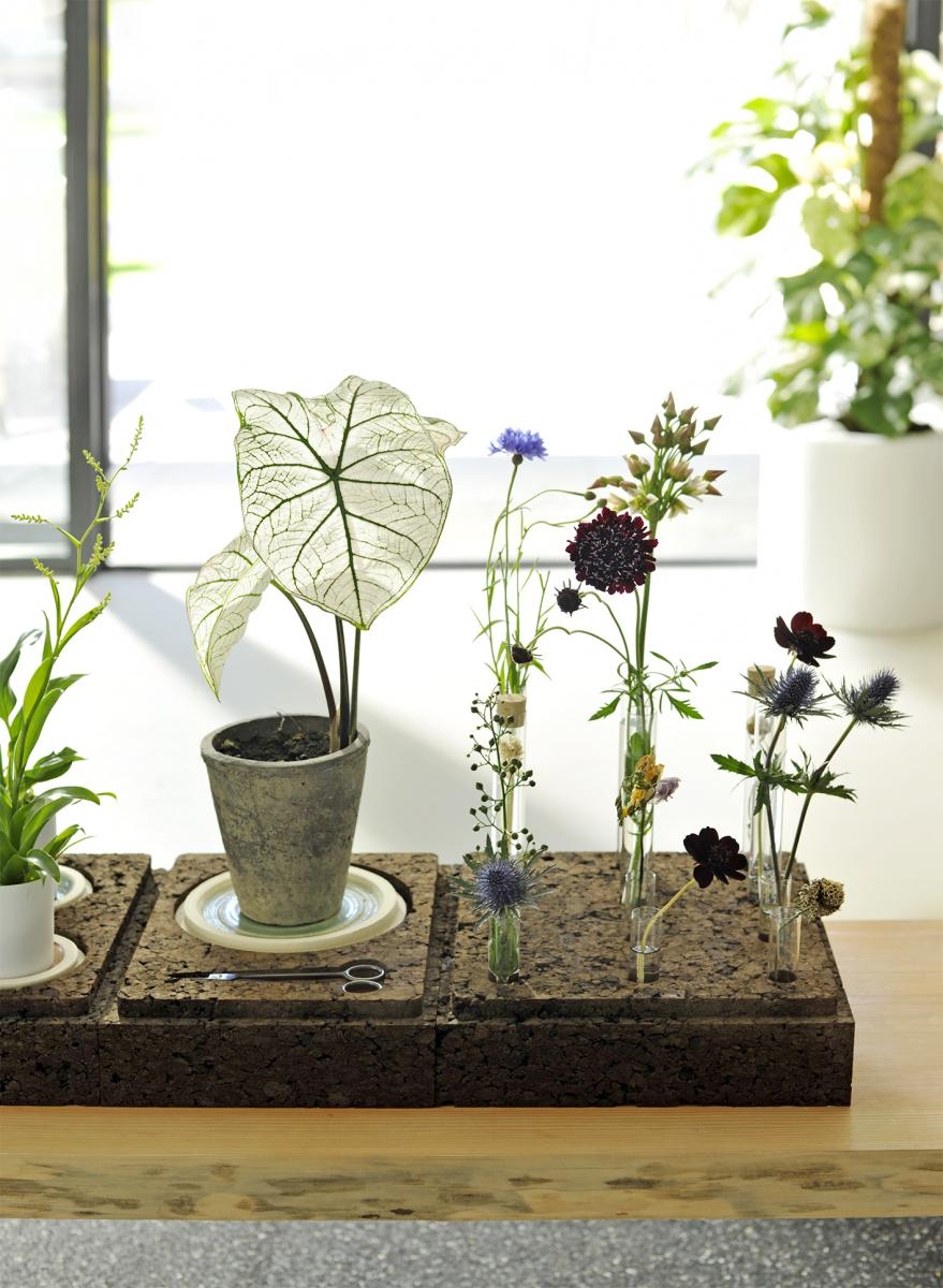 Plante D Intérieur Qui Aime La Chaleur comment entretenir ses plantes d'intérieur au quotidien